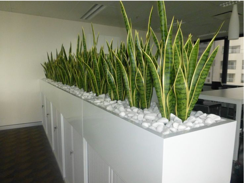 Indoor Office Plants Hire Melbourne Inscape Indoor