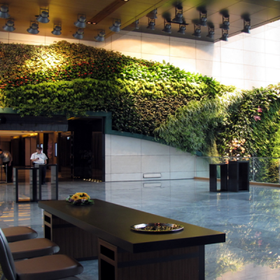 Hotel Indoor Plants Hire
