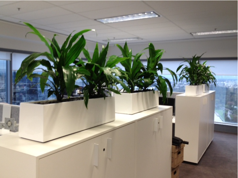 office planter boxes. premium partition troughs office planter boxes