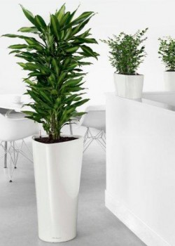 Benefit of Indoor Plants