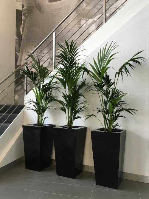 Premium Wedge Planters