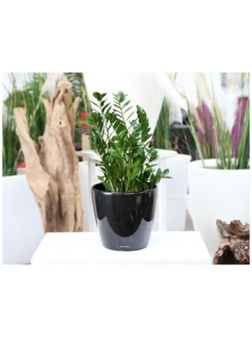 Premium Round Desk Planters