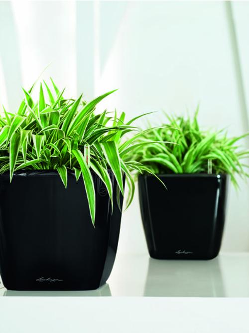 Premium Square Desk Planters