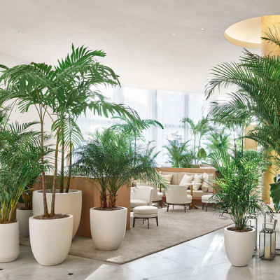 5 Star Hotel Indoor Plants Inscape Indoor Plant Hire