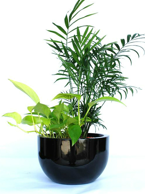 Desk Plant 01 – Mix Foliage