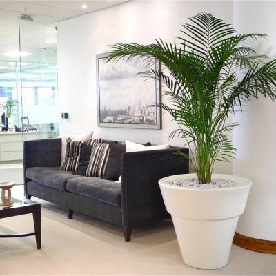 Indoor Plants For Universities